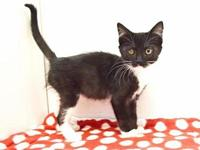 *TYRA's story Outgoing, loving, and affectionate kitten