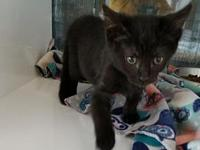 Tyson's story I'm a playful kitten looking for the