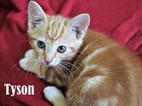 Tyson's story Tyson's adoption fee is $80 which covers