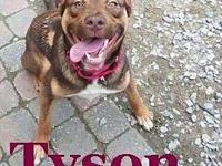 My story Hi! My name is Tyson and I am looking for my