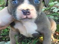 I have 5 Bully pups looking for a new home. They are