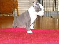 PRICE REDUCED These are very good puppies with the