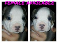 We have 1 female available and 3 males available. All