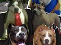 if you are looking for an official blue pit, here is