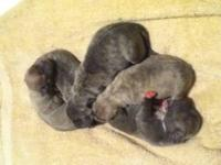 PUP ARE HERE DATE OF BIRTH 9-26-2012 (2-Males &