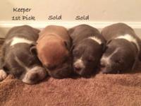 I have a couple of UKC registered bullies I'm wanting