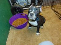 I have to sell my 11 week old female American bully.