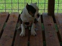 We are located in Whiteville NC and have 4 puppies