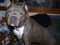 Pr ukc reg pocket pitbull for Sale in Elizabethtown