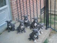 still have 2 left,1 Female and 1 Male, ready for homes
