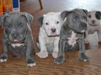 I have Lovely male and women puppies offered. They are