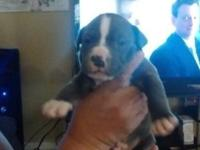 I have7 puppies available for new homes in about a