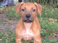 I have a 14wk old UKC Purple Ribbon male looking for a