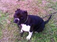 Ukc reg american bully female with great mood. She is a