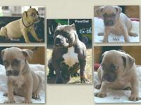 Have 3males, 1 female now available. $600 ea w/papers,