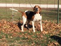 Molly is a UKC registered coon dog with papers and has