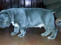 Blue trindle ... 5 weeks old ... will certainly all set
