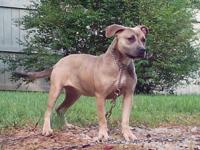 "UKC ""PR"" registered, very sweet girl. Very submissive,"