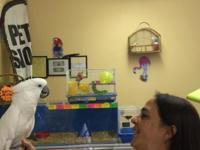 Susy's pet palace have's everything that your feathered