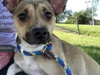 Una's story Una will be at PetSmart in Schererville,