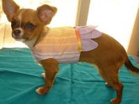 Enjoy knowing your tiny dog is wearing something nobody