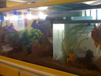 55 Gallon Fish tank & Stand - repainted white & yellow