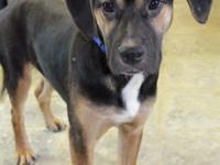 Name: Uno  Breed: Hound Mix Pup  Age: 8-10 months