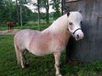 Red Roan gelding mini for sale. Our grand-daughter out