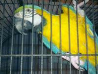 All types of Unwanted Birds, Parrots and Poultry