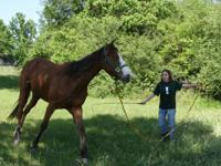 """Sally"" is a beautiful horse around 7 years-old, the"