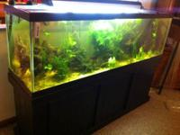 Nice 125 gallon tank, black cabinet stand, glass