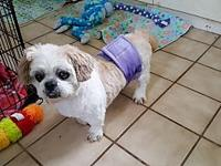 Usher's story Usher is an 8 year old 12 1/2 pound Shih