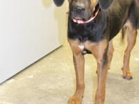 Name: Uzzi  Breed: Hound Mix Pup  Age: 8-10 months old