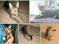 Vacaville Kitten - Juno's story Juno, 5 months as of
