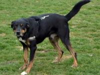 Val is a male 5-6 year old Shepherd mix who was rescued