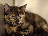 Vale's story I am a sweet-natured 5 month old who is