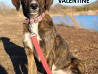 Meet Valentine! She is a very sweet loving dog needing