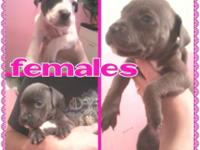 CHOOSE YOUR NEW PUPPY UP TODAY FOR VALENTINE !!! Going