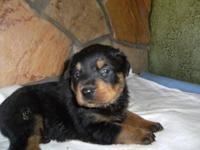 I AM ACCEPTING DEPOSITS ON APRI GERMAN ROTTWEILER