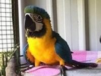 Oustanding macaw parrots, they are dna tested, tame and