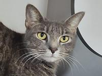 My story Valerie is a sweet and loving little girl who