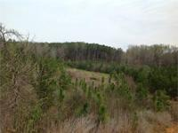 60 acres +/- of land for sale near Valley Grande,