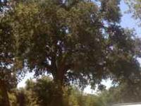 I have only 17 left. Awesome trees that grow big,