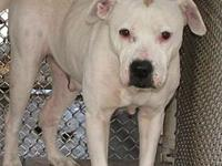 Vally's story Beautiful Vally is ready to snuggle with