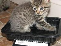 Valu (baby boy)'s story This is Valu a brown tabby male