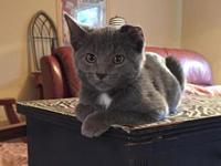 "Van's story From her foster: ""This is Van, named after"