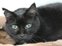 Van Gough is a super senior who is really laid back.