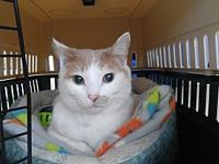 Vanya's story My name is VANYA! I am a three year old,
