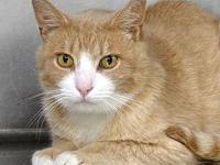 Varian's story Varian is a sweet shy older guy looking