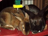 Here is a list of rabbits needing a new home as pets or